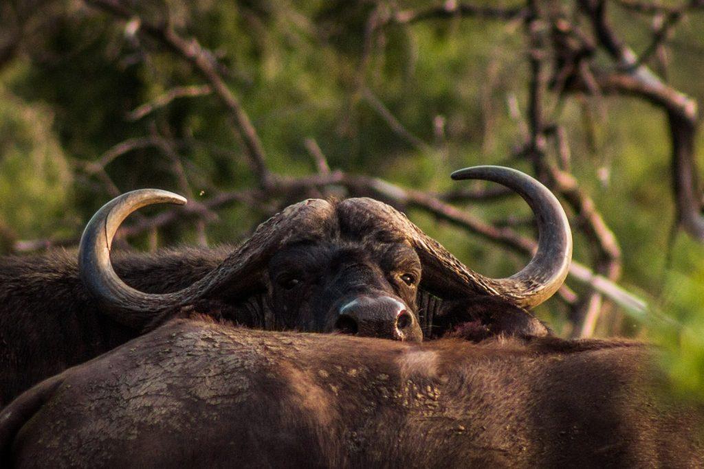 Mpeti Mammal List